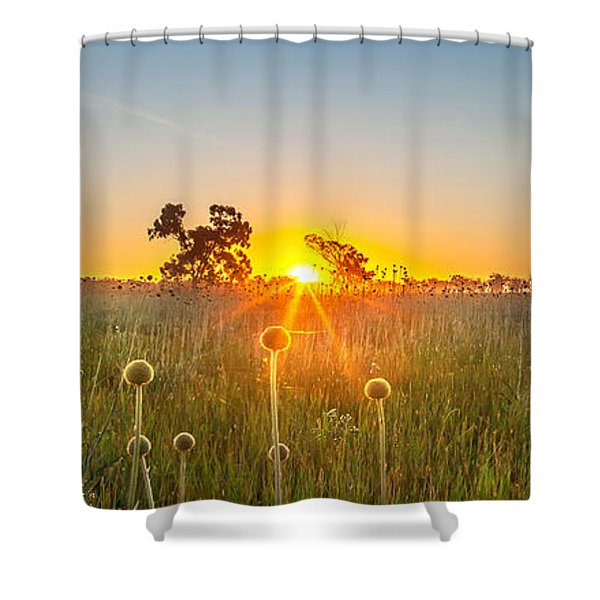 Fields Of Gold Panorama Shower Curtain