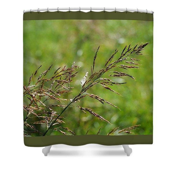 Fields Of Grain Shower Curtain