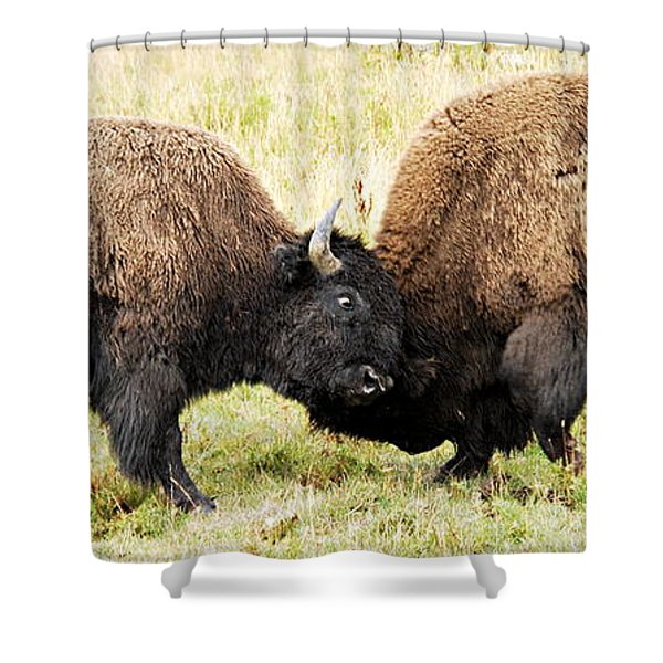 Fight  Shower Curtain