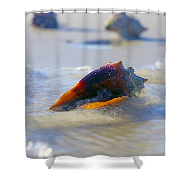Fighting Conch On Beach Shower Curtain