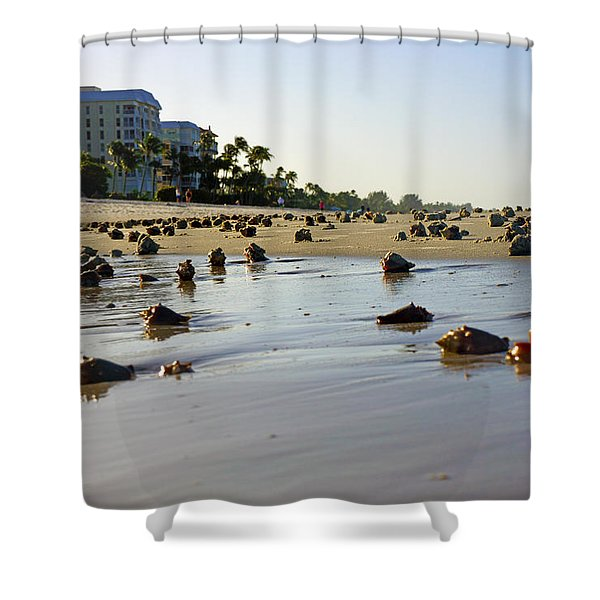 Fighting Conchs At Lowdermilk Park Beach In Naples, Fl  Shower Curtain