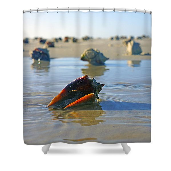 Fighting Conchs On The Sandbar Shower Curtain