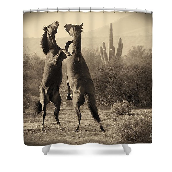 Fighting Stallions Shower Curtain