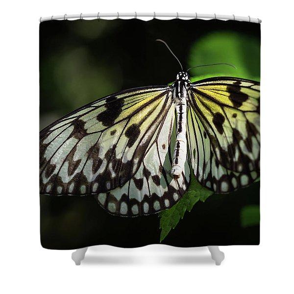 Final Metamorphosis Shower Curtain