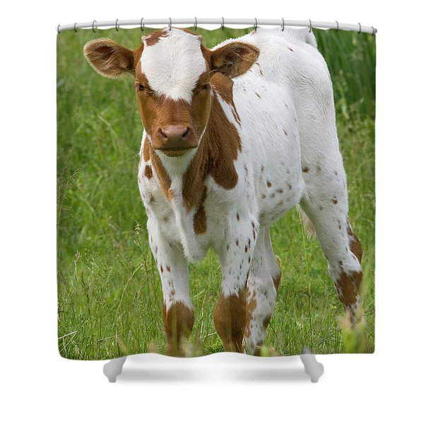 Fine Looking Longhorn Calf Shower Curtain
