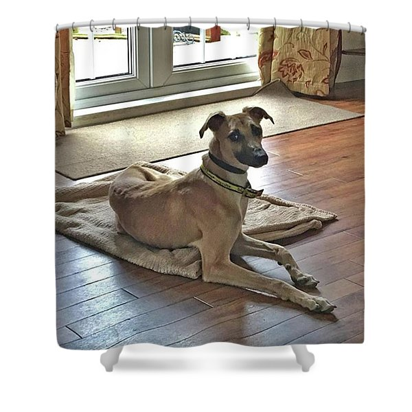 Finly - Ava The Saluki's New Companion Shower Curtain