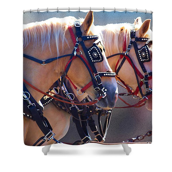 Fire Horses Shower Curtain