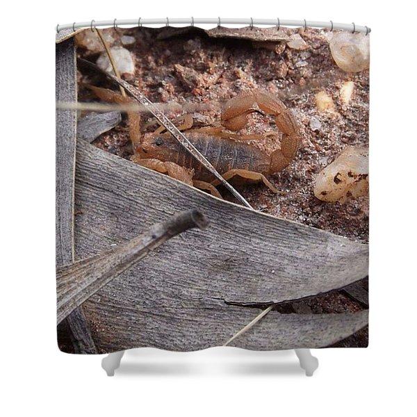 My First Wild Scorpion Shower Curtain