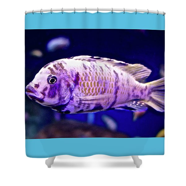 Calico Goldfish Shower Curtain