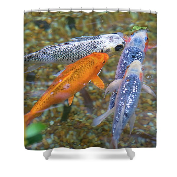 Fish Fighting For Food Shower Curtain