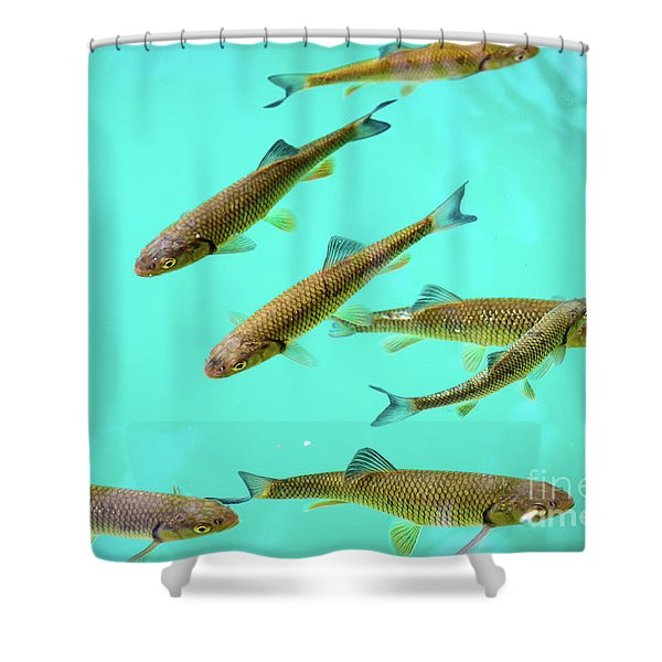 Fish School In Turquoise Lake - Plitvice Lakes National Park, Croatia Shower Curtain