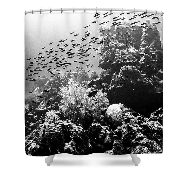 Shower Curtain featuring the photograph Fish School Rainbow by Perla Copernik