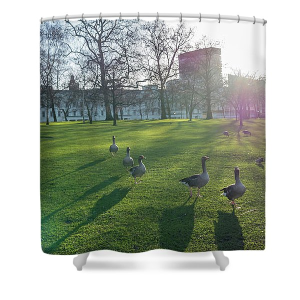Five Ducks Walking In Line At Sunset With London Museum In The B Shower Curtain