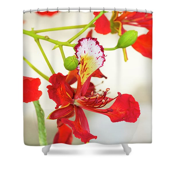 Flame Tree Flower Shower Curtain