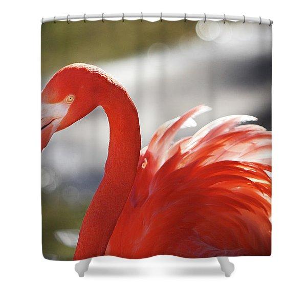 Flamingo 2 Shower Curtain