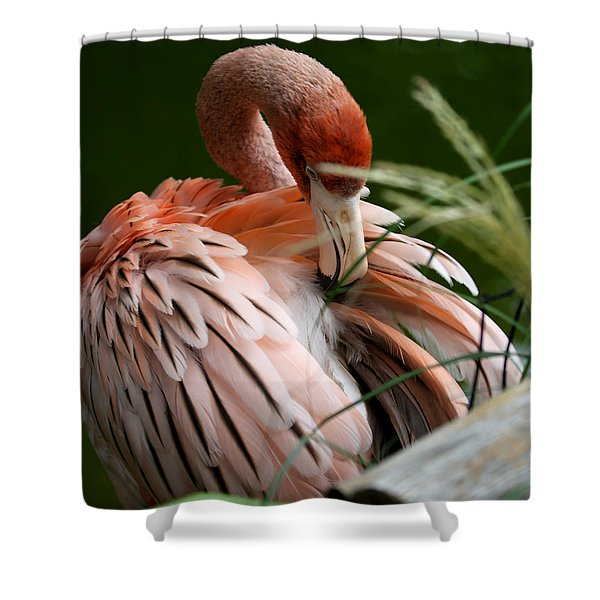 Flamingo Boudoir Shower Curtain