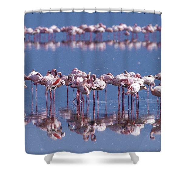 Flamingo Reflection - Lake Nakuru Shower Curtain