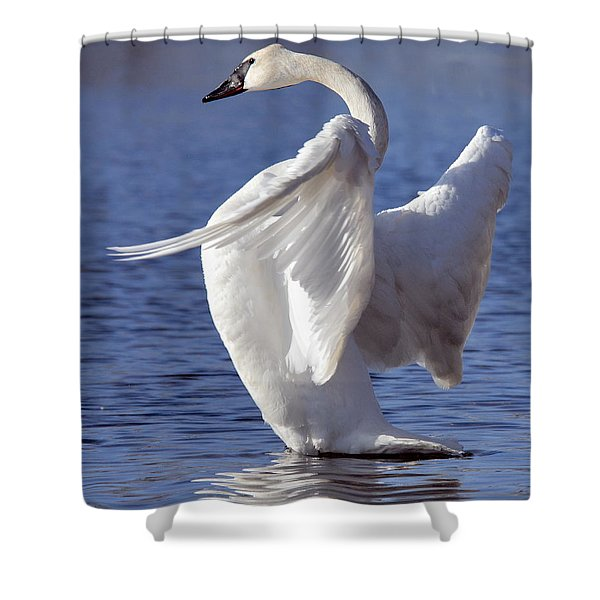 Flapping Swan Shower Curtain