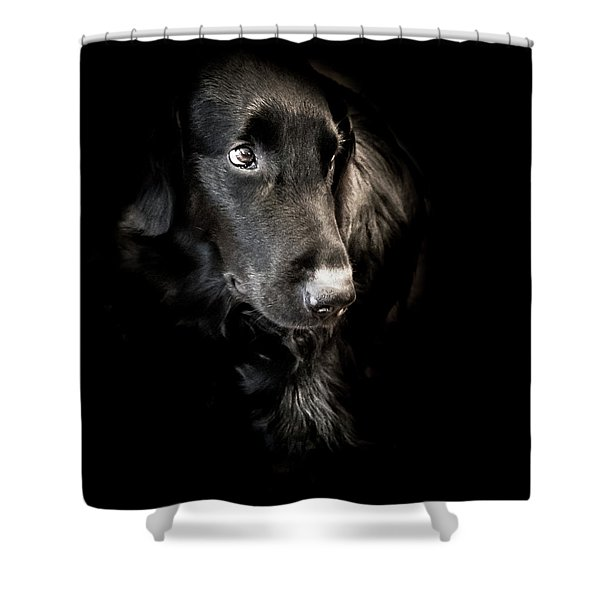 Flat Coated Retriever Shower Curtain