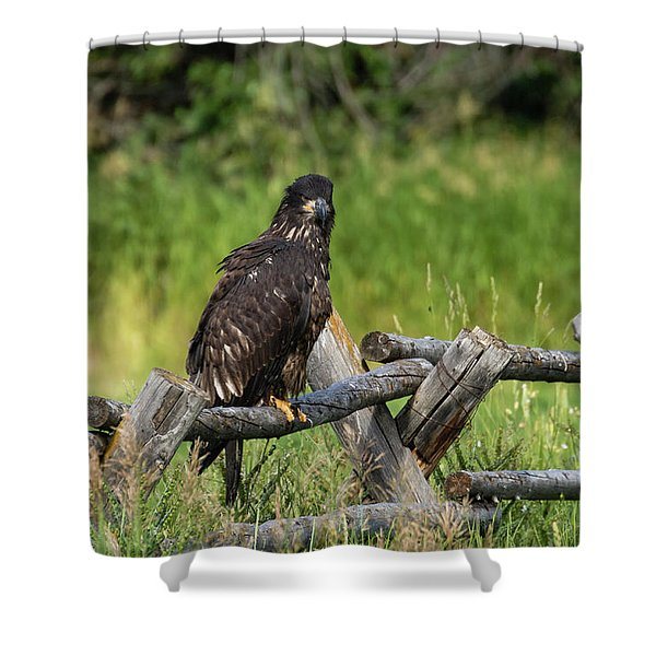 Shower Curtain featuring the photograph Fledging by Ronnie and Frances Howard