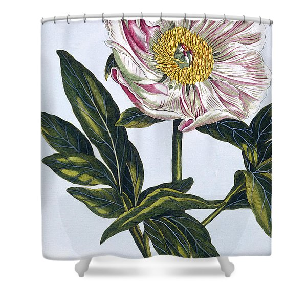 Flesh Colored Common Peony Shower Curtain