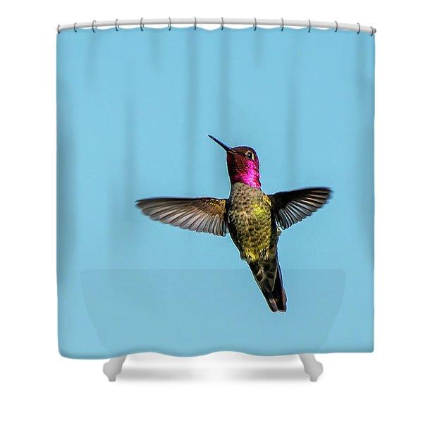 Flight Of A Hummingbird Shower Curtain