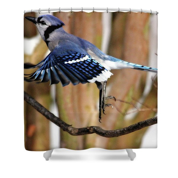 Flight Of The Blue Jay Shower Curtain