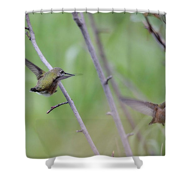 Flight Of The Calliopes Shower Curtain