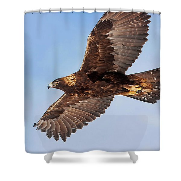 Flight Of The Golden Eagle Shower Curtain