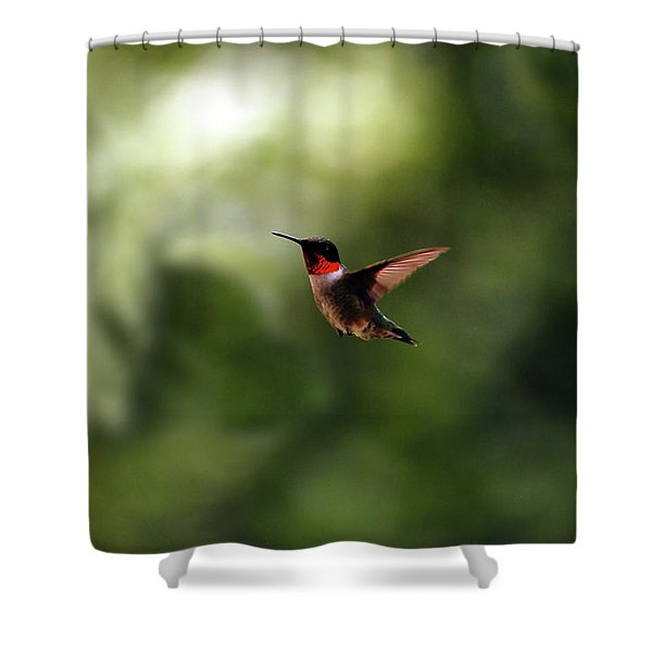 Flight Of The Hummingbird Shower Curtain