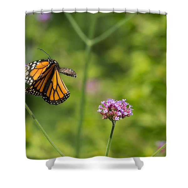 Flight Of The Monarch 2 Shower Curtain
