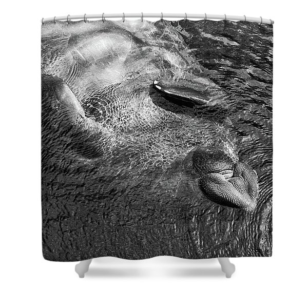 Floating Manatee Shower Curtain