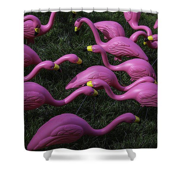 Flock Of  Plastic Flamingos Shower Curtain