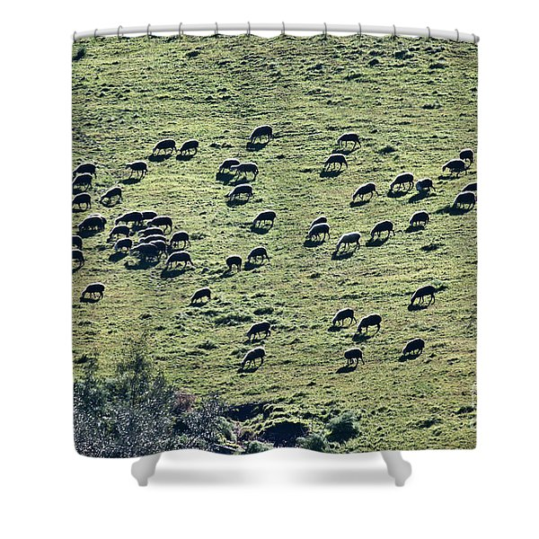 Flock Of Sheep Shower Curtain