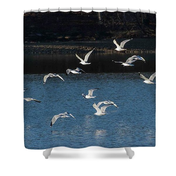 Flock Of Them Shower Curtain