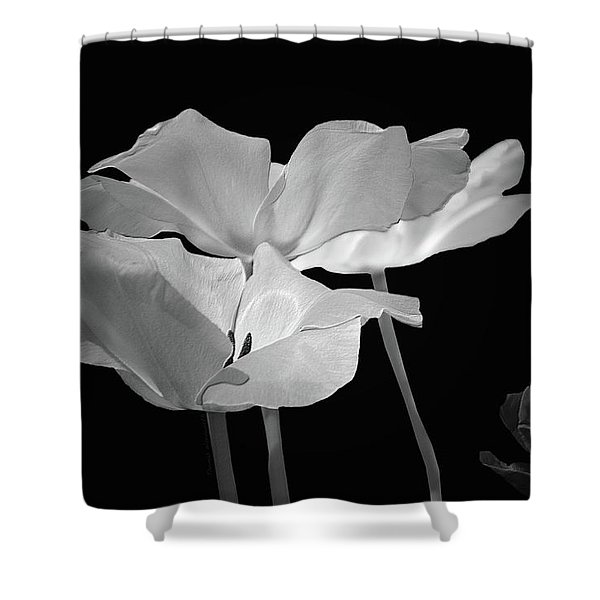 Floral Spring Tulips 2017 Bw 01 Shower Curtain