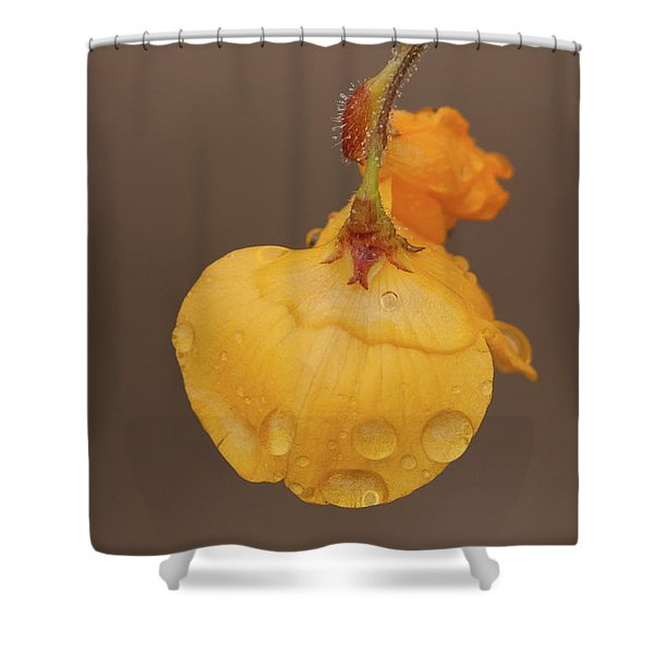 Florida Alicia Shower Curtain