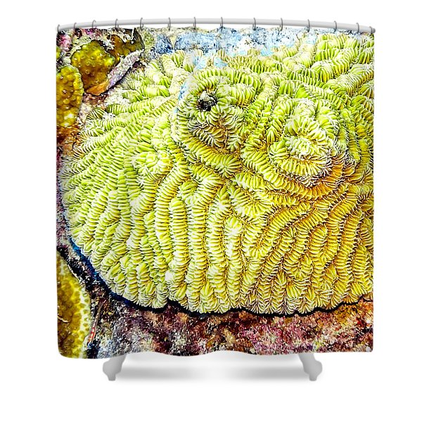 Shower Curtain featuring the photograph Flower Coral by Perla Copernik