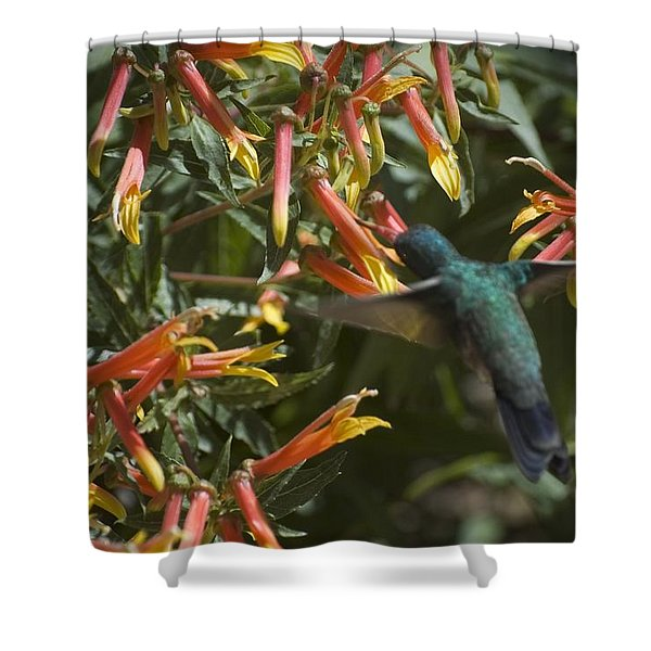 Flower Has To Bloom, Bird Has To Eat Shower Curtain