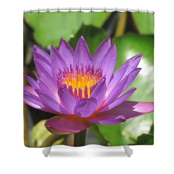 Flower Of The Lilly Shower Curtain