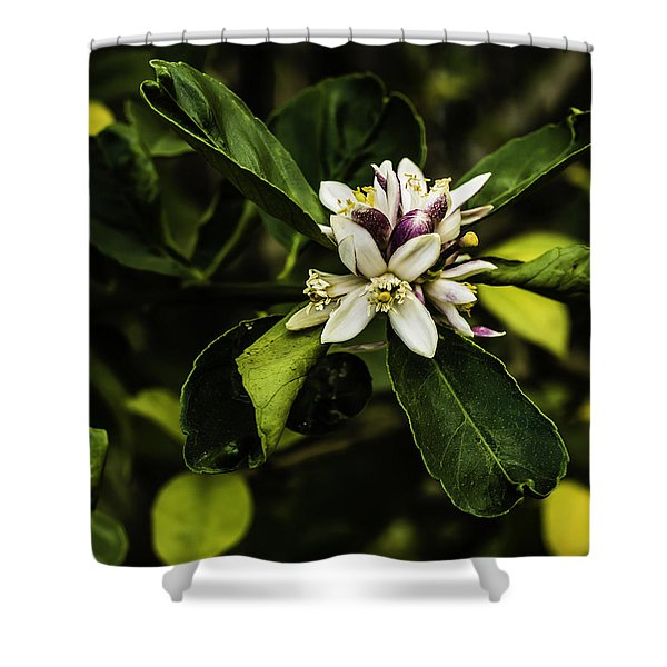 Flower Of The Lemon Tree Shower Curtain