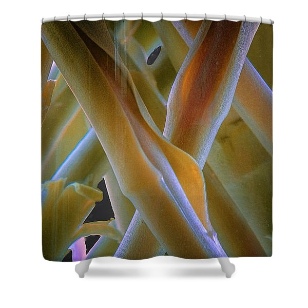 Shower Curtain featuring the photograph Flower Stems by Tom Singleton