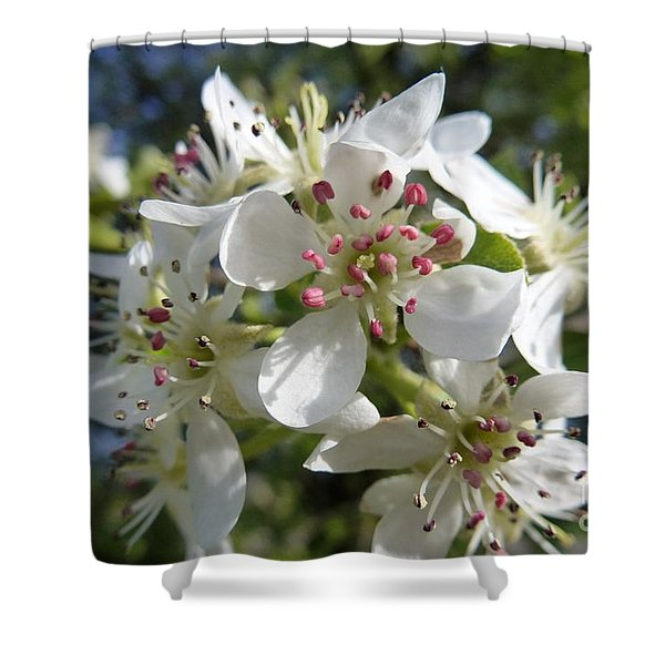 Flowering Of White Flowers 2 Shower Curtain