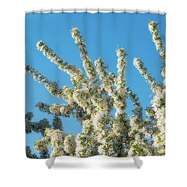 Flowering Pear Tree Number 2 Shower Curtain