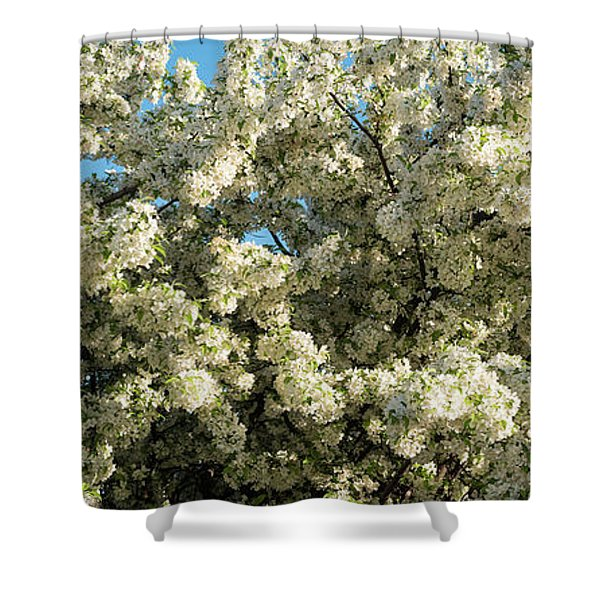 Flowering Pear Tree Shower Curtain
