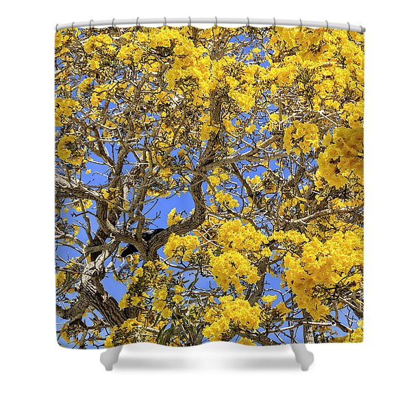 Flowering Tabebuias Tree Shower Curtain
