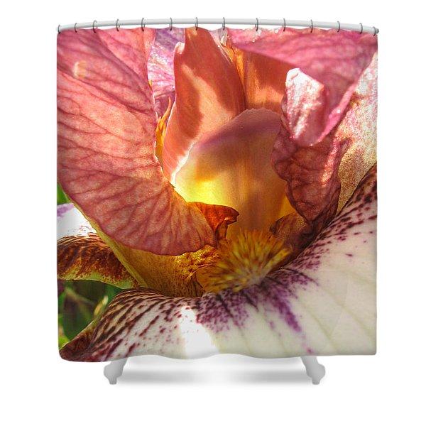 Flowerscape Pink Iris One Shower Curtain