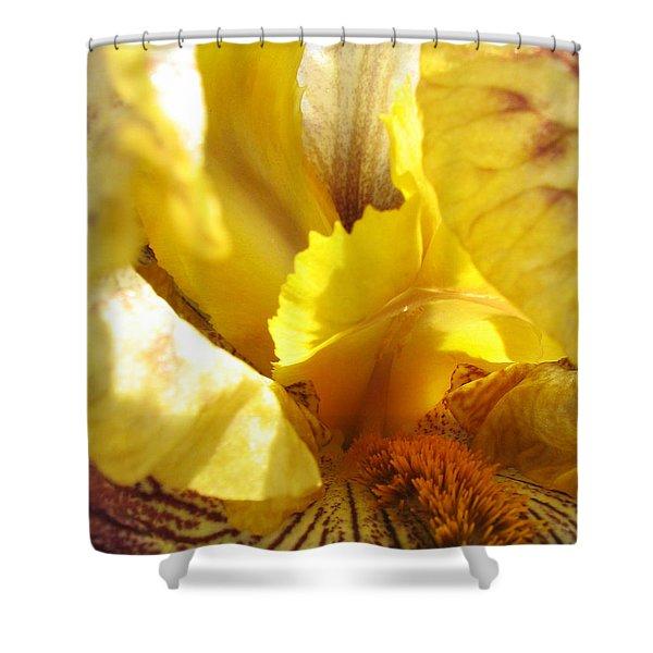 Flowerscape Yellow Iris Three Shower Curtain