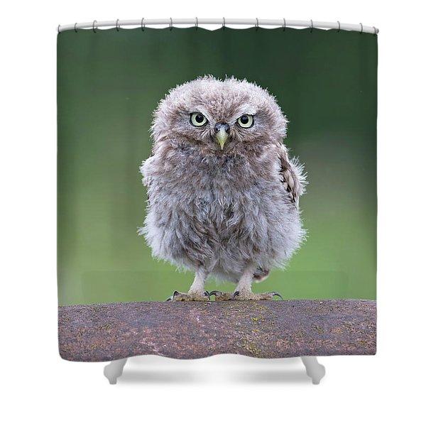 Fluffy Little Owl Owlet Shower Curtain