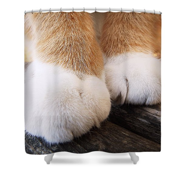Fluffy Paws Shower Curtain